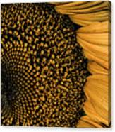 Macro Sunflower Canvas Print