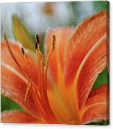 Macros Day Lily Canvas Print