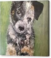 Macy As A Puppy Canvas Print