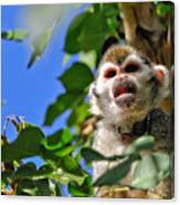 Mad Monkey Canvas Print