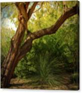 Made In The Shade Canvas Print