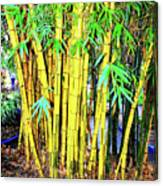 City Park Bamboo Grass Canvas Print