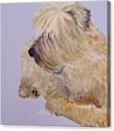 Madigan Wheaten Terrier Canvas Print