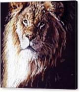 Maestro Canvas Print