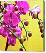 Magenta Orchid 3 Canvas Print