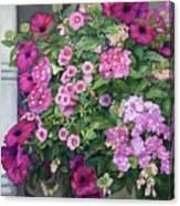 Magenta Petunias Canvas Print