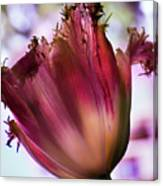 Magenta Tulip Canvas Print