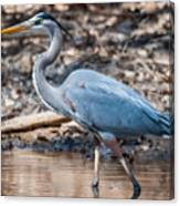 Magestic Heron Canvas Print