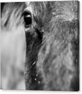 Maggie The Cow Abstract Canvas Print