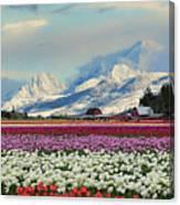Magic Landscape 1 - Tulips Canvas Print