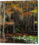 Magical Cypress Trees Forest Canvas Print