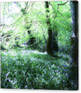 Magical Forest At Blarney Castle Ireland Canvas Print