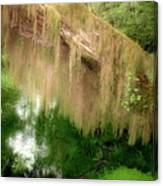 Magical Hall Of Mosses - Hoh Rain Forest Olympic National Park Wa Usa Canvas Print