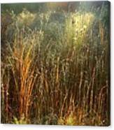 Magical Light On The Marsh Canvas Print