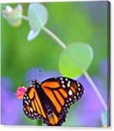 Magical Monarch Canvas Print