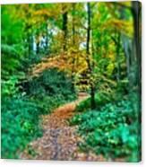Magical Woodland Walk Canvas Print