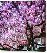 Magnificant Magnolias Canvas Print