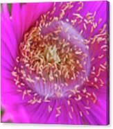 Magnificent Flower Canvas Print
