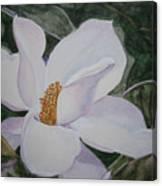 Magnificent Magnolia Canvas Print