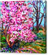 Magnolia - Early Spring Canvas Print