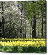 Magnolia And Daffodils Canvas Print