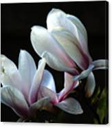 Magnolia And House Guest Canvas Print