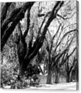 Magnolia Ave Canvas Print