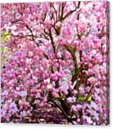 Magnolia Beauty #14 Canvas Print