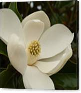 Southern Magnolia Bloom Canvas Print
