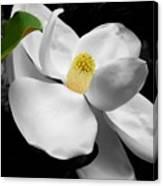 Magnolia Blossom Canvas Print