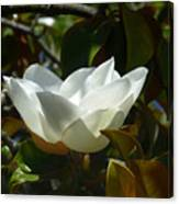 Magnolia Flower Chalice Canvas Print