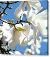 Magnolia Flowers Floral Art Spring Flowering Tree Baslee Troutman Canvas Print