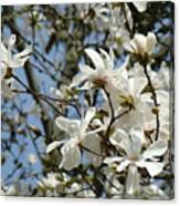 Magnolia Flowers White Magnolia Tree Flowers Art Prints Canvas Print