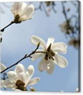 Magnolia Flowers White Magnolia Tree Spring Flowers Artwork Blue Sky Canvas Print