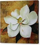 Magnolia Grandiflora Canvas Print