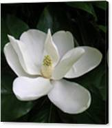 Magnolia Greeting The Day Canvas Print