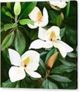 Magnolia Canvas Print