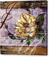 Magnolia In Limbo Dp19 Canvas Print