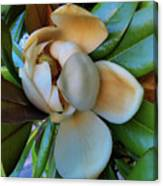 Magnolia In Oxford Canvas Print