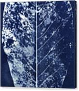 Magnolia Leaf Skeleton Canvas Print