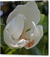 Magnolia No 6 Canvas Print