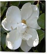 Magnolia No 7 Canvas Print