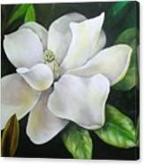 Magnolia Oil Painting Canvas Print