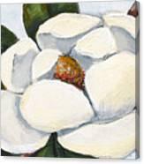 Magnolia On Blue Canvas Print