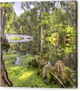 Magnolia Plantation Bridge Cypress Garden Canvas Print