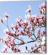Magnolia Tree Against Blue Sky Canvas Print