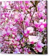 Magnolia Tree Beauty #1 Canvas Print