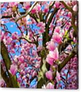 Magnolia Tree Beauty #3 Canvas Print