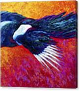 Magpie In Flight Canvas Print