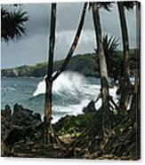 Mahama Lauhala Keanae Peninsula Maui Hawaii Canvas Print